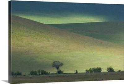 Panoramic view of hill, Ngorongoro Crater, Arusha Region, Tanzania