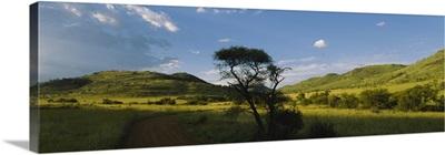 Path on a landscape, Zimbabwe