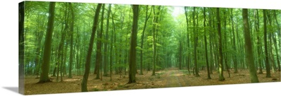 Pathway Through Forest Mastatten Germany