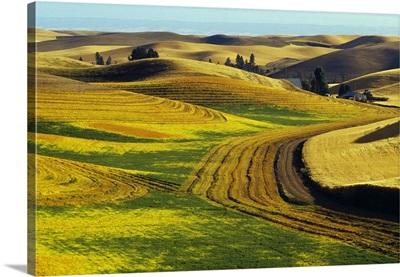 Patterns in farm fields, rolling hills of Palouse region, Washington