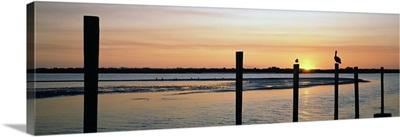 Pelicans perching on a pilings, Daytona Beach, Volusia County, Florida,