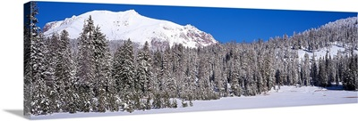 Pine trees in a national park, Lassen Volcanic National Park, California,