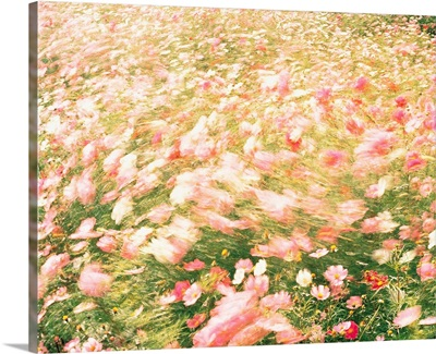 Pink wildflower meadow in breeze