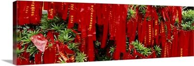 Prayer ribbons tied to a tree, Jade Buddha Temple, Shanghai, China