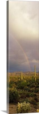 Rainbow Sonoron Desert Phoenix AZ