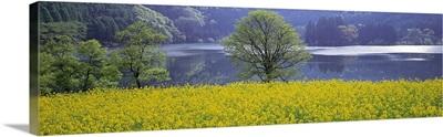 Rape Field Lake Nagano Japan