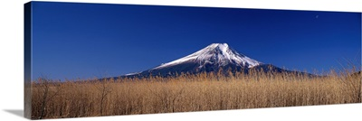 Reeds and Mt. Fuji Oshino Yamanashi Japan
