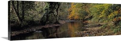 Reflection of autumn trees in a river River Teign Dunsford Dartmoor Devon England