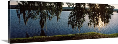 Reflection of tree in a river, Middleton Place, Charleston, Charleston County, South Carolina,
