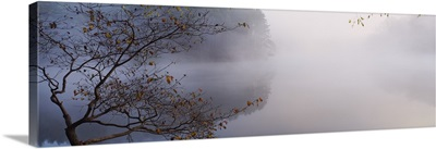 Reflection of trees in a lake, Lake Vesuvius, Wayne National Forest, Ohio
