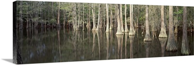 Reflection of trees in a lake, Tallahassee, Florida