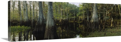 Reflection of trees in water, Fisheating Creek, Everglades, Palmdale, Florida