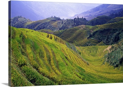 Rice paddy terraces on rolling hills, Longsheng Area, China.