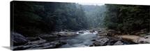 River flowing through a forest, Chattooga River, Georgia near South Carolina
