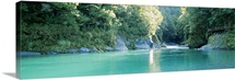 River passing through a forest, Blue Pools, Mt Aspiring National Park, Otago Region, South Island, New Zealand