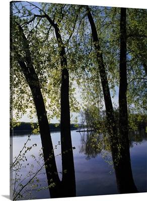 Riverview through budding trees, Mississippi River, Upper Mississippi National Wildlife Refuge, Iowa