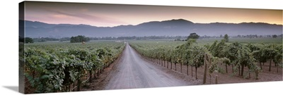 Road in a vineyard, Napa Valley, California