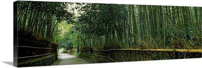Road passing through a bamboo forest, Arashiyama, Kyoto Prefecture, Kinki Region, Honshu, Japan