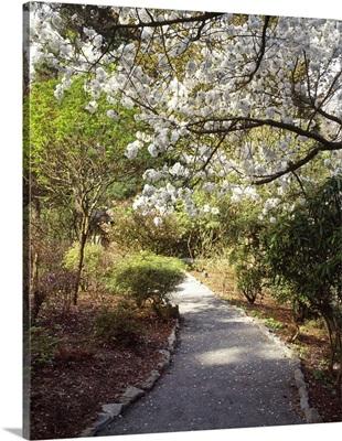Road passing through a botanical garden Crystal Springs Rhododendron Garden Multnomah County Oregon