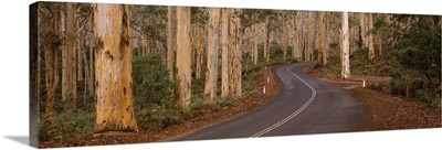 Road passing through a forest, Caves Road, Boranup Forest, Leeuwin Naturaliste National Park, Western Australia, Australia