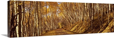 Road passing through a forest, Colorado,