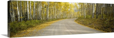 Road passing through a forest, Colorado