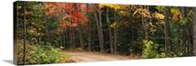Road passing through a forest, Keweenaw County, Keweenaw Peninsula, Michigan
