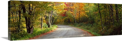 Road passing through a forest, Lamoille County, Vermont,