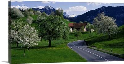 Road w/blooming trees Luzern Switzerland
