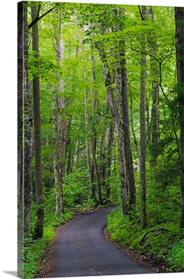 Roaring Fork Road winding through spring forest, Great Smoky Mountains National Park, Tennessee