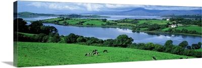 Rolling green fields Bantry Bay Cork Co Ireland