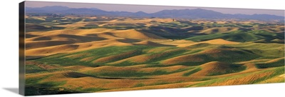 Rolling landscape with mountains in the background, Steptoe Butte State Park, Palouse, Whitman County, Washington State,