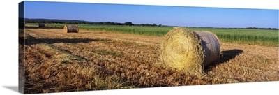 Round Bales of Hay TX