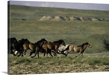 Running Mustangs SD