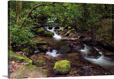 Rushing stream through Appalachian hardwood forest, spring, Great Smoky Mountains National Park, North Carolina