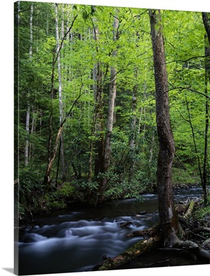 Rushing stream through dense forest, Great Smoky Mountains National Park, Tennessee