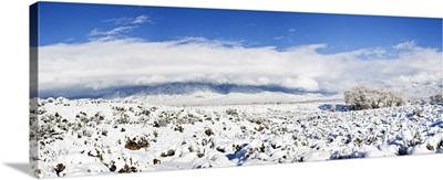Sage covered with snow, Taos Mountain, Sangre De Cristo Range, San Luis Valley, Colorado