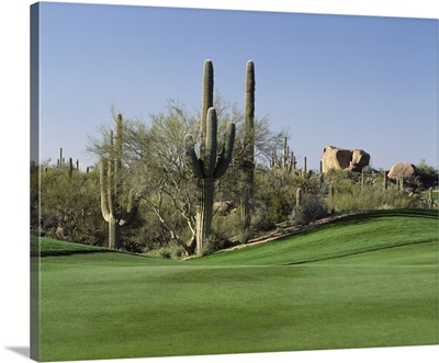 Saguaro cacti in a golf course, Troon North Golf Club, Scottsdale, Maricopa County, Arizona