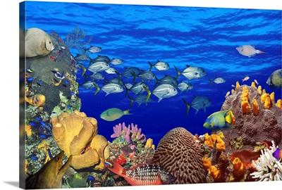School of fish swimming near a reef