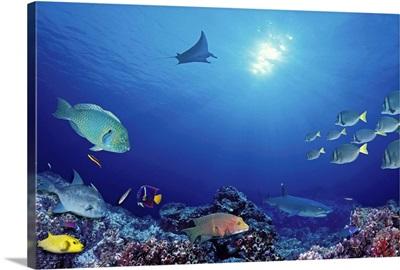 School of fish swimming near a reef, Galapagos Islands, Ecuador