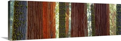 Sequoia Grove Sequoia National Park CA
