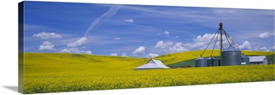 Shed in a mustard field, Colfax, Washington State