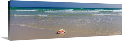 Shell on the beach, Alabama, Gulf of Mexico