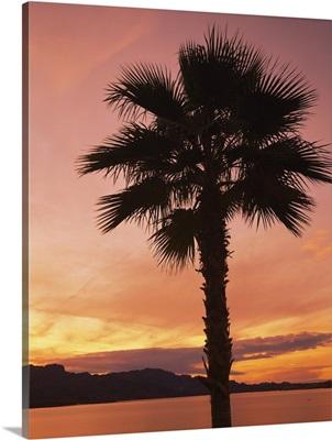 Silhouette of a palm tree, Havasu Lake, Havasu City, Mohave County, Arizona