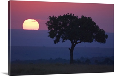 Silhouette of a tree at dawn, Masai Mara National Reserve, Kenya