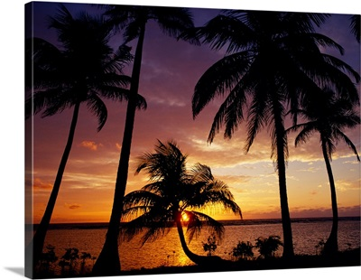 Silhouette of palm tree on the coast at sunrise, Barrier Reef, South Water Caye, Belize
