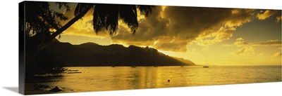 Silhouette of palm trees at dusk, Cooks Bay, Moorea, French Polynesia