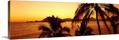 Silhouette of palm trees at dusk, Manzanillo, Mexico