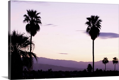 Silhouette of palm trees at dusk, Palm Springs, Riverside County, California