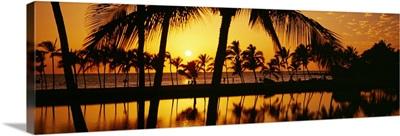 Silhouette of palm trees at sunset, Anaeho Omalu Bay, Waikoloa, Hawaii